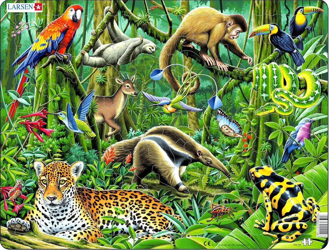 Животные тропиков фото 5