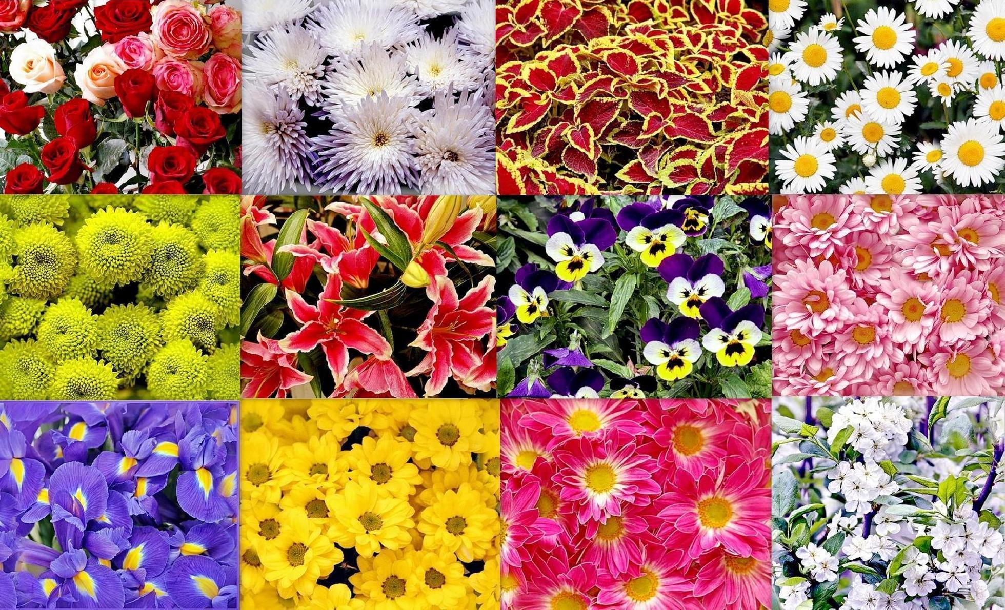 Коллаж цветок из фото