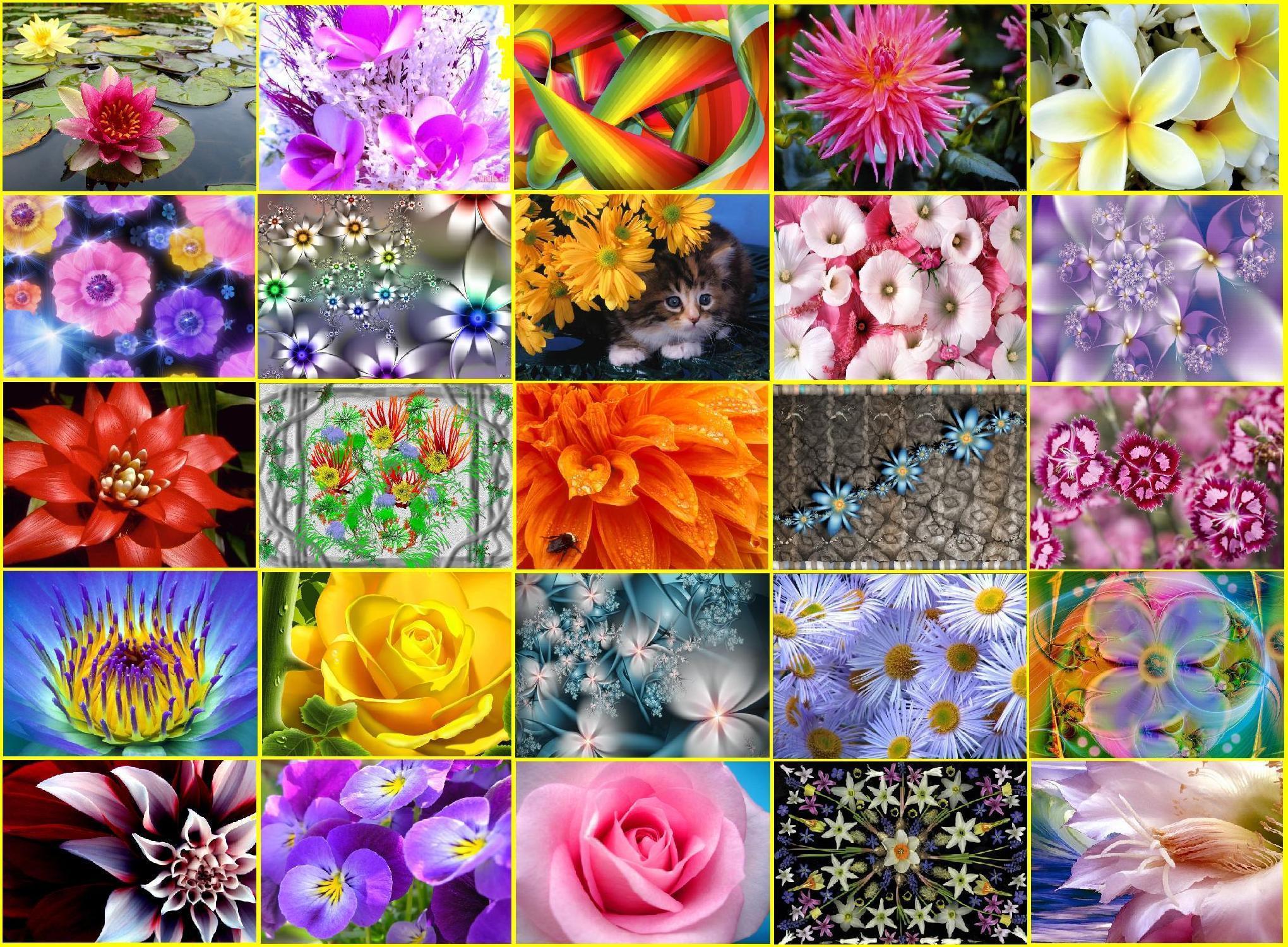 Коллаж цветы: картинки и изображения цветы коллаж, скачать 62