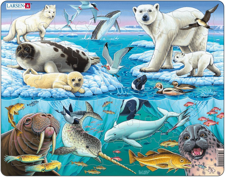Животные живущие в арктике картинки 2
