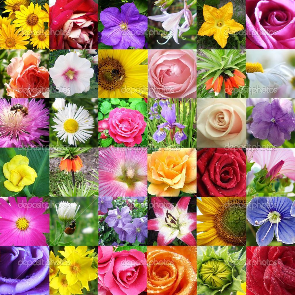 Коллаж фото в цветке