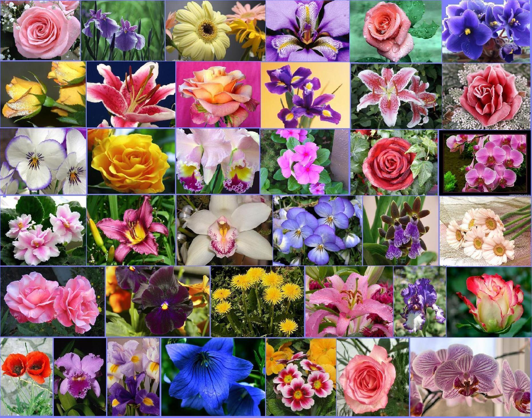 Цветы для коллажа своими руками